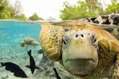 Азорские острова - чудо посреди океана?
